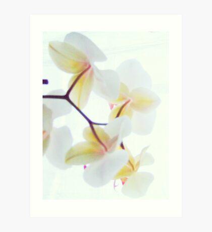White Orchid No3 Art Print