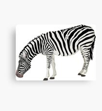 Zebra, Illustration Canvas Print