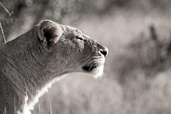 Fierce Lady Lion by Karen van Beek