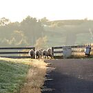 Is it Safe to Cross, Ross, Tas by Wendy Dyer