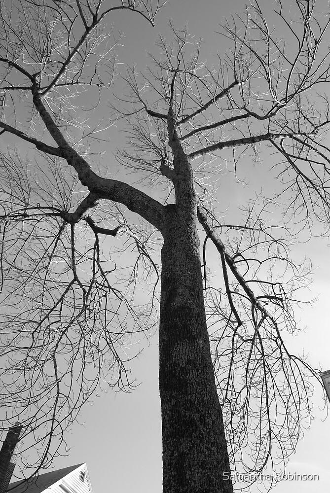 Tall tree by Samantha Robinson