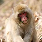 Monkey eating grass by demistified