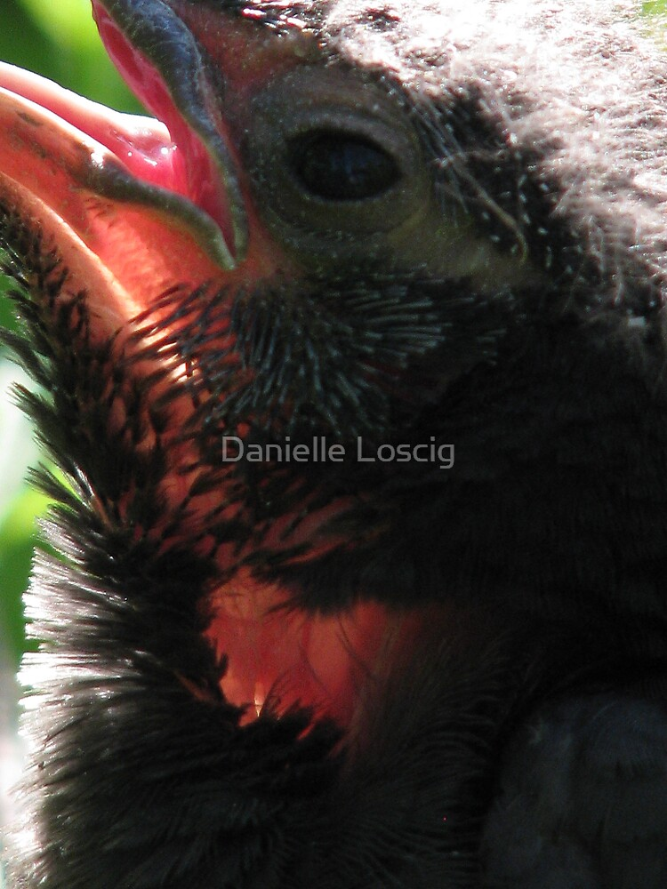 Transparency by Danielle Loscig