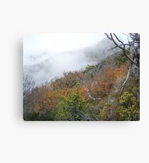 fagus covered hillsides with Hansons Peak shrouded in mist Canvas Print