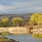 Macquarie River in Ross, Tas by Wendy Dyer