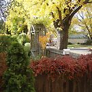 Autumn Colours in Ross, Tas by Wendy Dyer