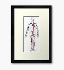 Human Body Anatomy Framed Print