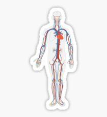 Human Body Anatomy Sticker
