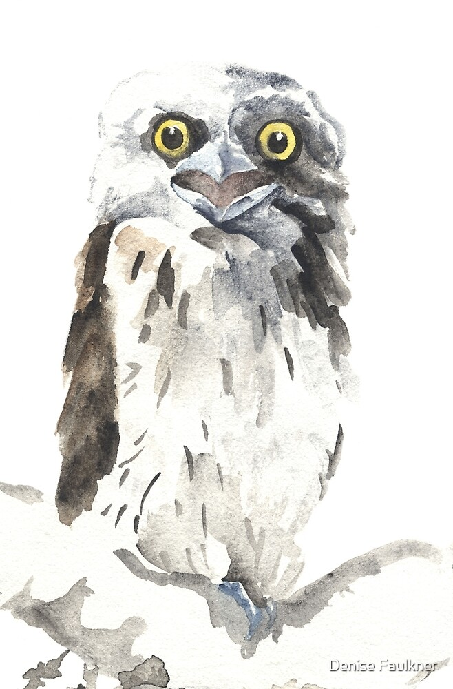 Tawny Frogmouth By Denise Faulkner Redbubble