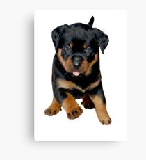 Cute Female Rottweiler Puppy Running Canvas Print