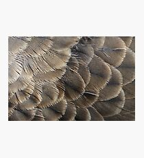 Pigeon feathers Photographic Print