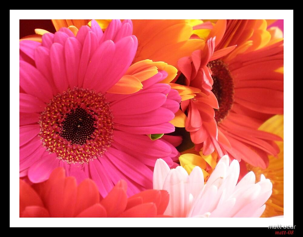 flowers by matt ucar