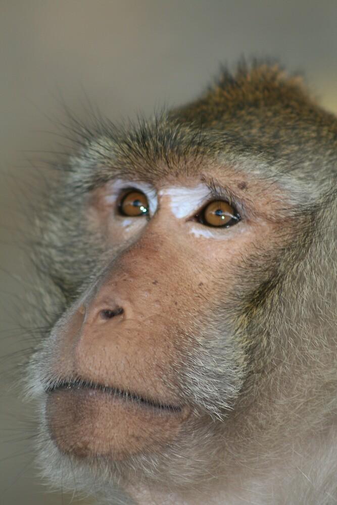 monkey by weesha