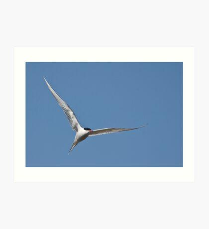 Tern and tern again Art Print