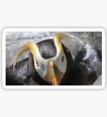 Emperor Penguin Living Coast Sticker