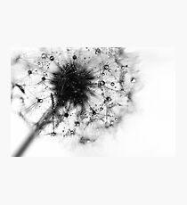 pure Photographic Print