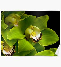 Green Orchid Macro Poster
