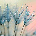 summer rain by Ingrid Beddoes