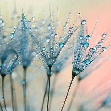 summer rain by Ingz