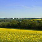 Dorset Countryside by bubblebat