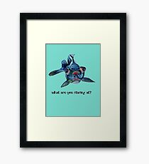 Blackmoor Goldfish And Text What Are You Staring At?  Framed Print