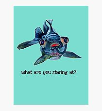 Blackmoor Goldfish And Text What Are You Staring At?  Photographic Print