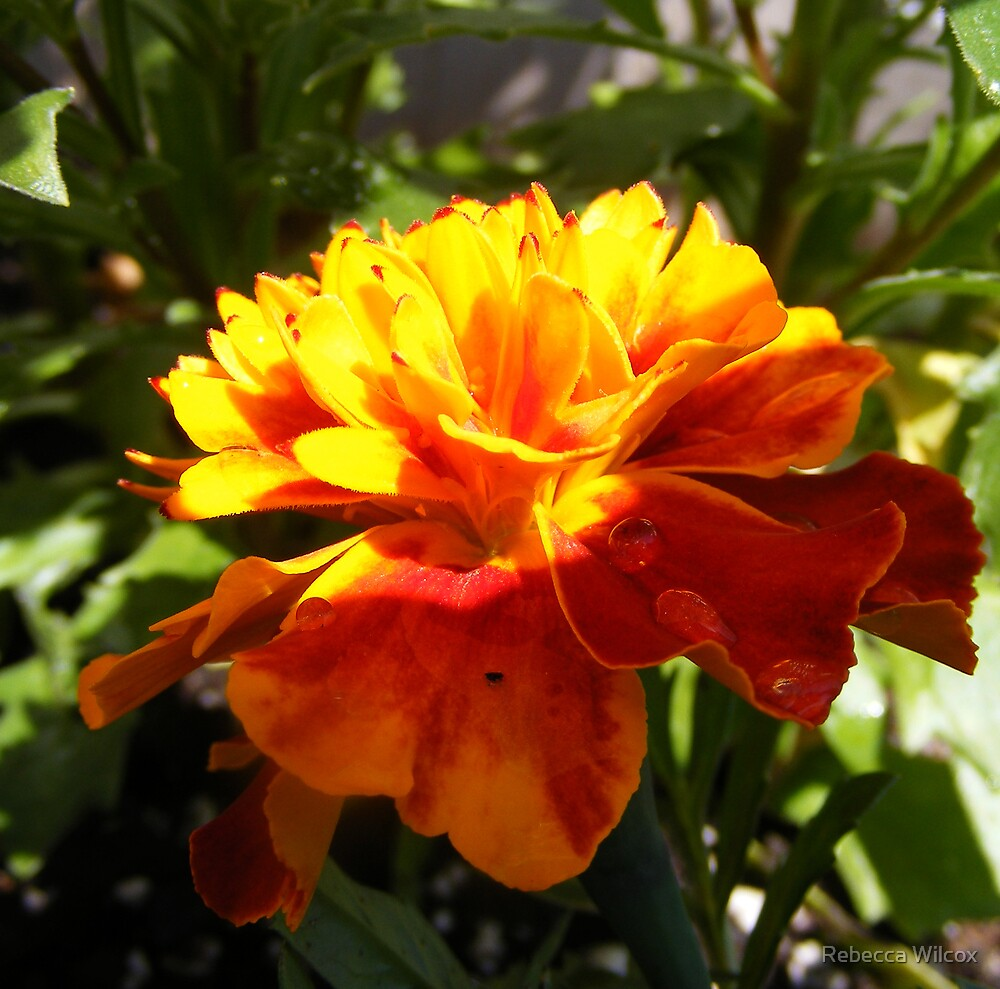 Flower 1 by Rebecca Brann