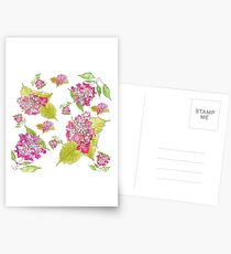 Summer pink hydrangeas  Postcards