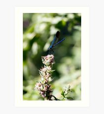 Elegant blue dragonfly Art Print