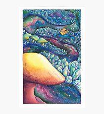 Mushroom Pathway Photographic Print
