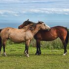 The Lundy Ponies by Avril Harris