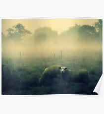Dreaming of Sheep - JUSTART © Poster