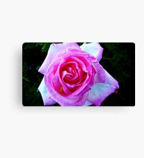 PINK FOR THE LADIES Canvas Print