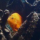 Underwater by Celeste Thinks