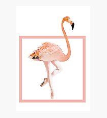Flamingo dancer Photographic Print