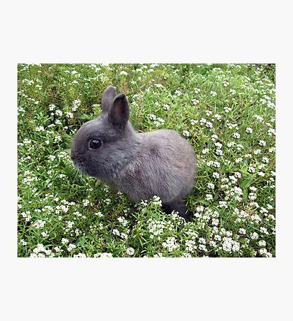 Bunny in Sweet Heaven Photographic Print