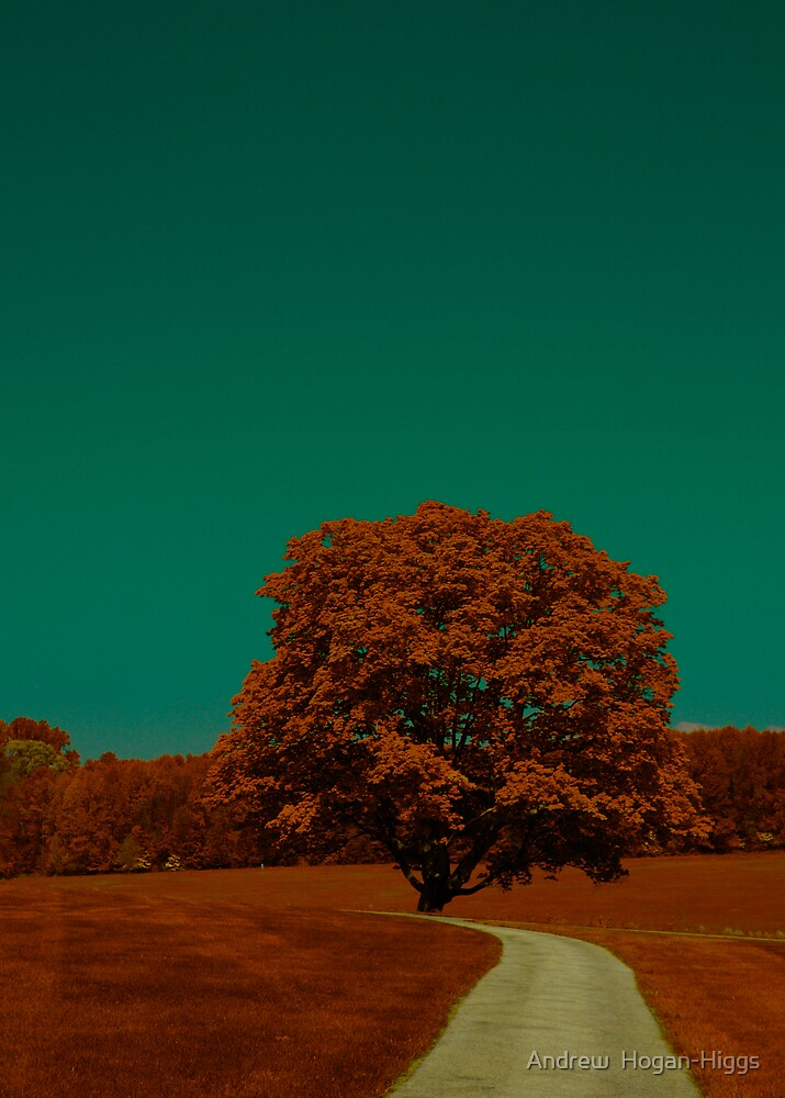 August Falling by Andrew  Hogan-Higgs