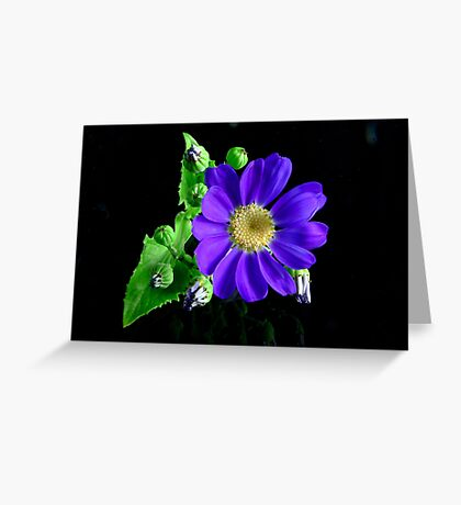 Blue Cineraria Greeting Card