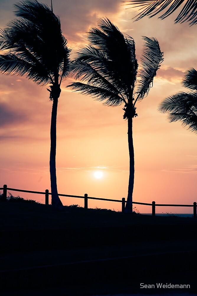 Cable Beach Palms by Sean Weidemann