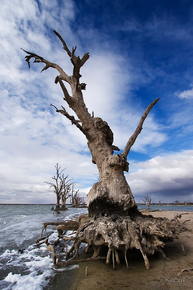 Crab Tree by KathyT