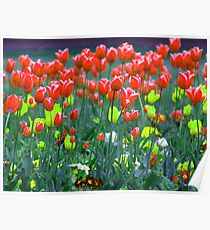 Field of Painted Flowers Poster
