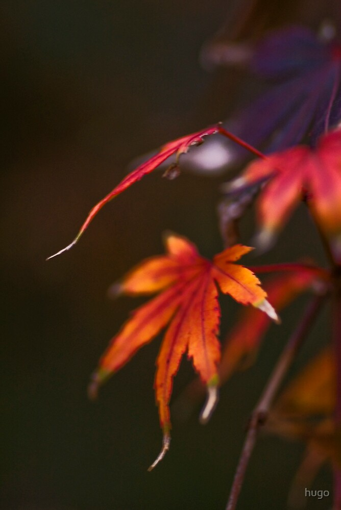 AUTUMN - AGING GRACEFULLY by hugo