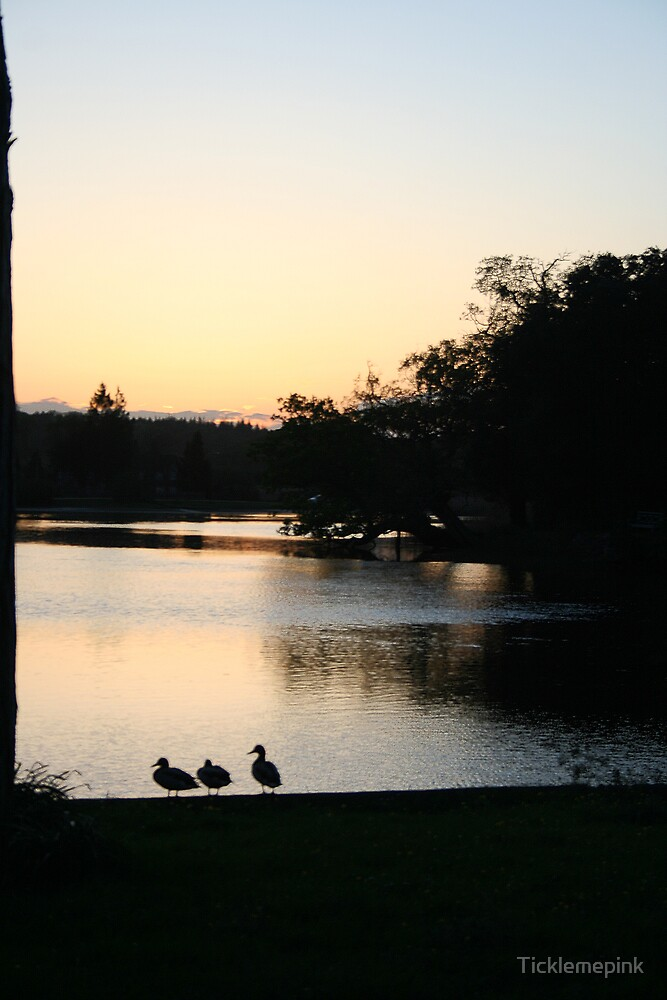 Duck's At Sunset Bealieu Pond by Ticklemepink