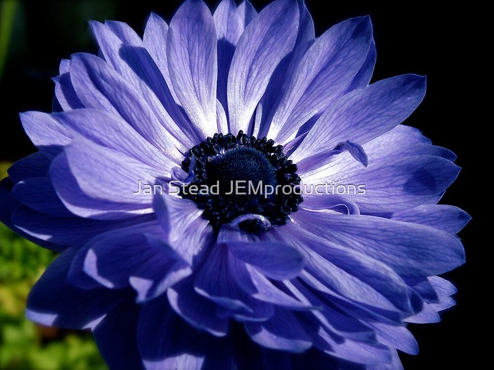 purple passion by Jan Stead JEMproductions