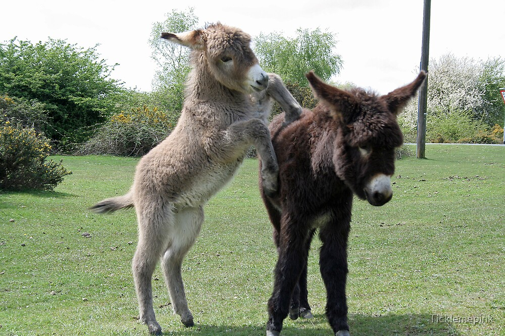 Baby Donkeys At Play by Ticklemepink
