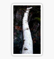 Easter birch Sticker