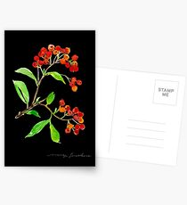 Orange Firethorn Postcards