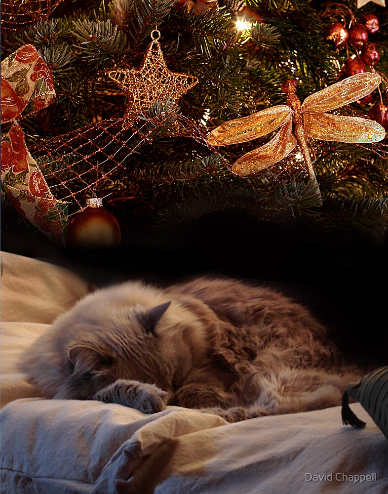 Christmas Dreams by David Chappell