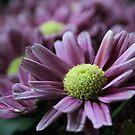 Pink Beauty by shellyb