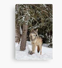 Majestic Wolf Canvas Print